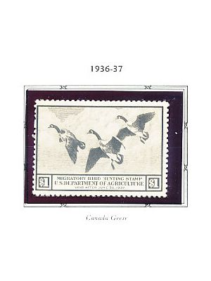 U.S. DUCK STAMPS - 1936 to 1960 - Complete NH Ducks - 408375