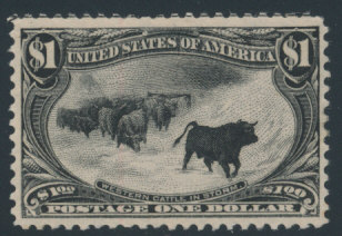 Western Cattle in Storm